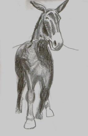 pencil of mule_front view