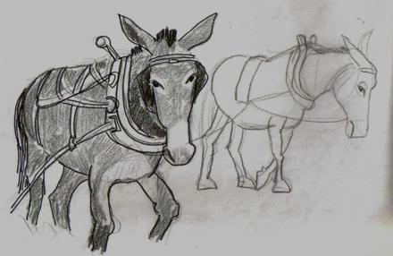 Mules with harness