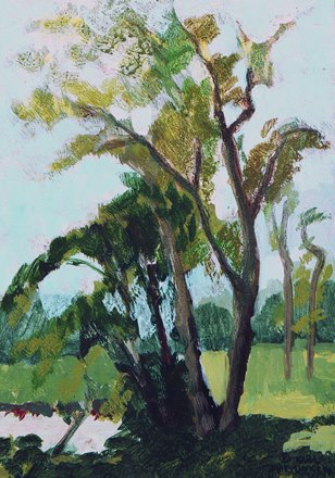 Study of Tall Tree by Karl